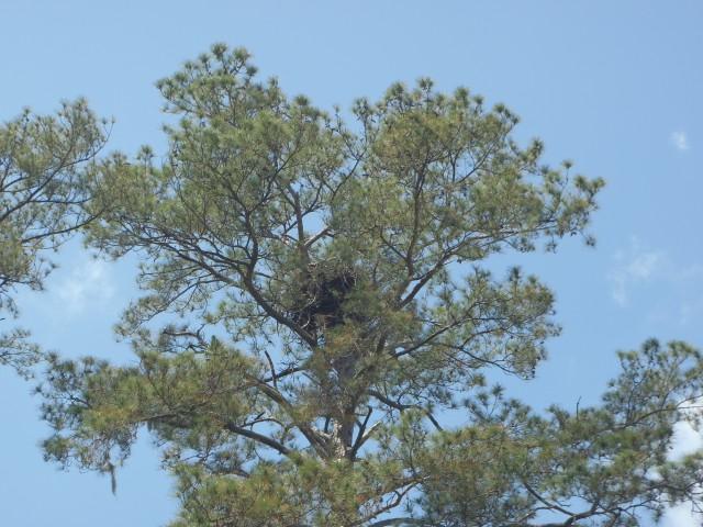 Eagle Nest Pigeon Island